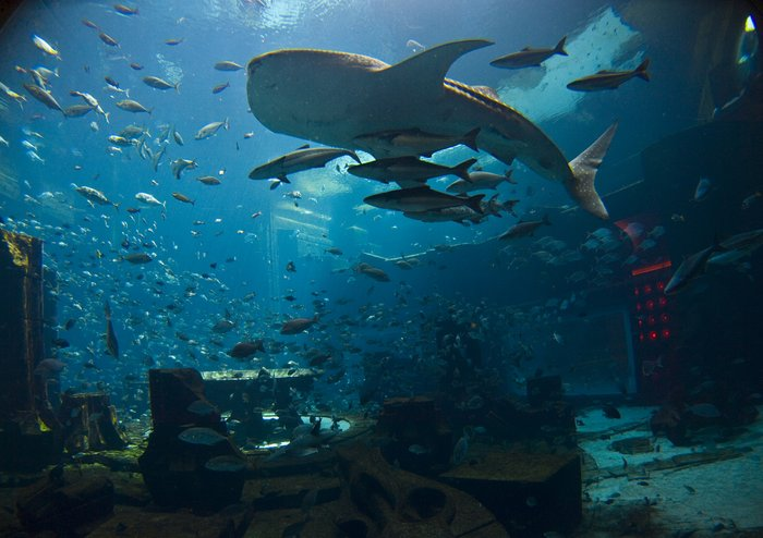 аквапарка Aquaventure,